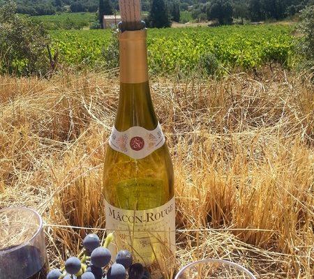 bouteille de vin dans un champs