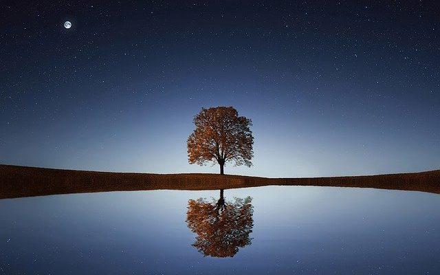 Reflexion d'un arbre sur l'eau