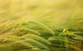 La dynamique du développement de l'agriculture biologique enclenchée dans les Hauts-de-France